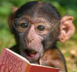 stone monkey's Photo